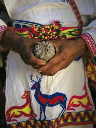 Foto: Cultura colectiva