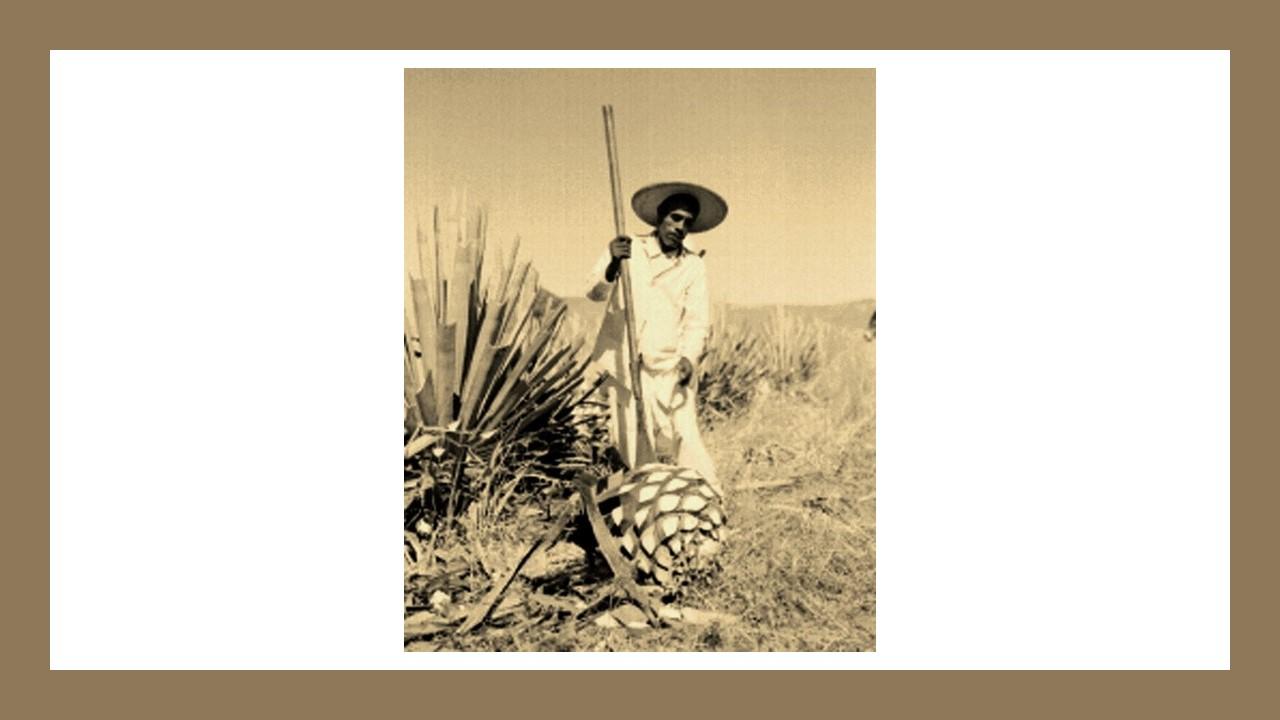 Mezcal Caxcano