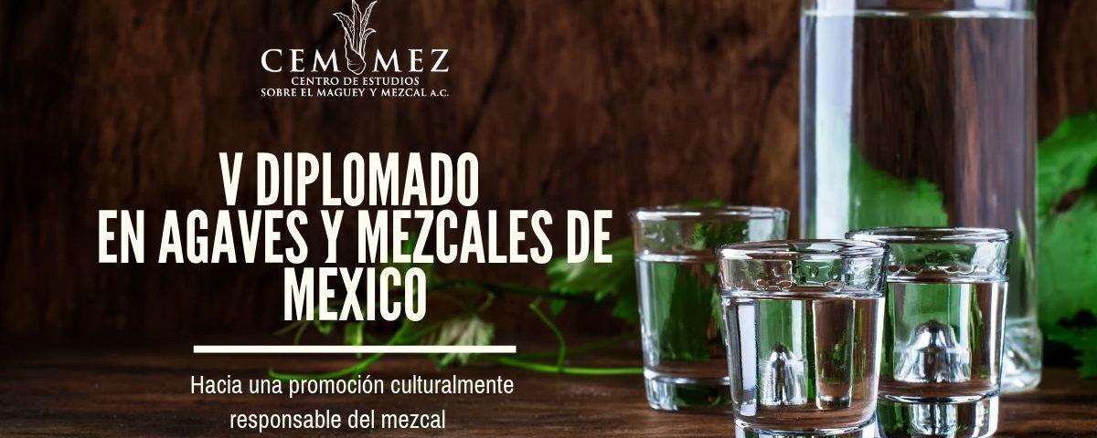 Diplomado en agaves y mezcales de México