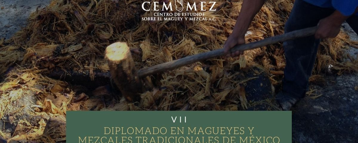VII Diplomado en magueyes y mezcales tradicionales de México